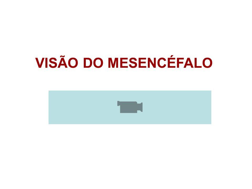 VISÃO DO MESENCÉFALO