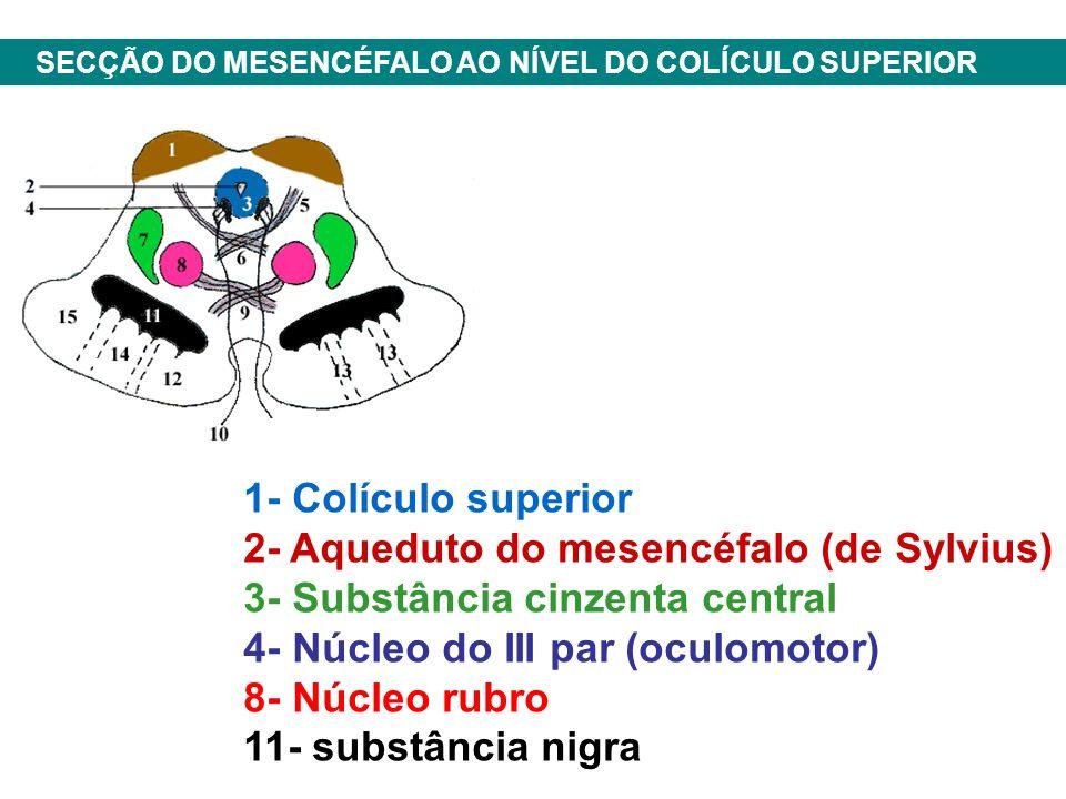1- Colículo superior 2- Aqueduto do mesencéfalo (de Sylvius) 3- Substância cinzenta central 4- Núcleo do III par (oculomotor) 8- Núcleo rubro 11- substância nigra SECÇÃO DO MESENCÉFALO AO NÍVEL DO COLÍCULO SUPERIOR
