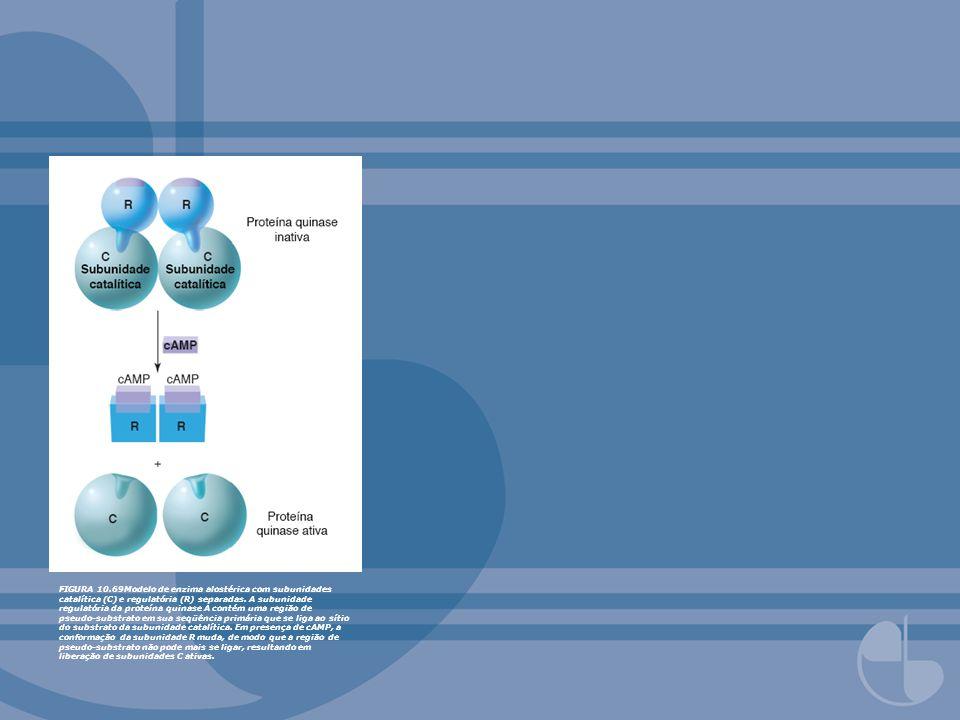 FIGURA 10.69Modelo de enzima alostérica com subunidades catalítica (C) e regulatória (R) separadas. A subunidade regulatória da proteína quinase A con