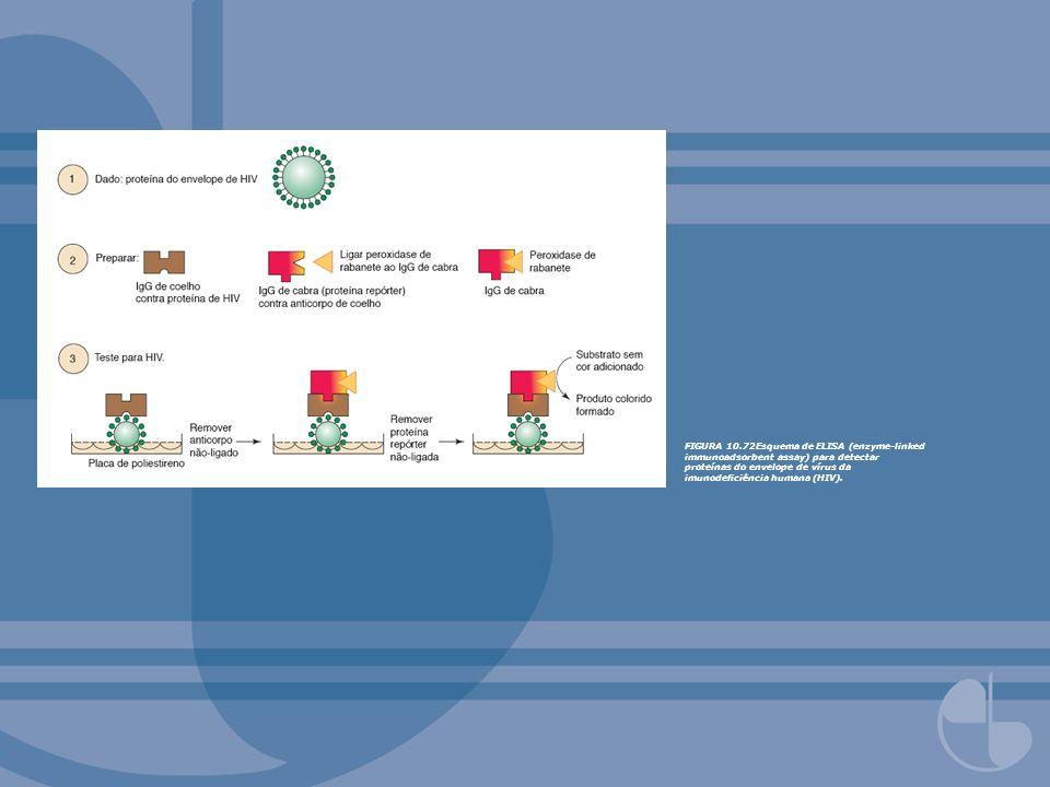 FIGURA 10.72Esquema de ELISA (enzyme-linked immunoadsorbent assay) para detectar proteínas do envelope de vírus da imunodeciência humana (HIV).