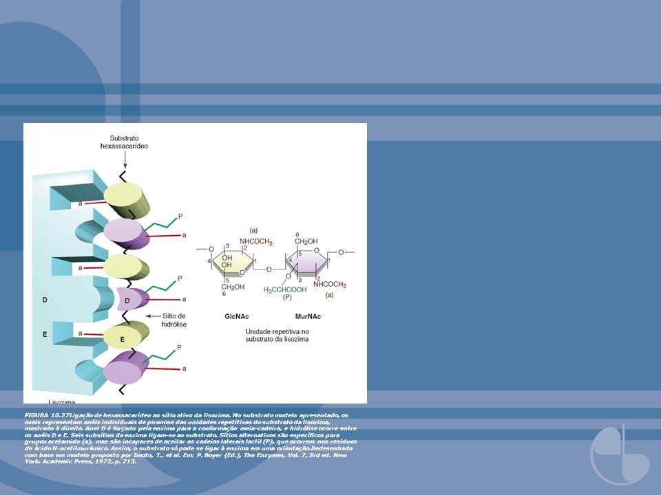 FIGURA 10.31A Dobra de Rossmann em álcool desidrogenase de fígado.NAD(H) liga-se à dobra de Rossmann na maioria das desidrogenases.