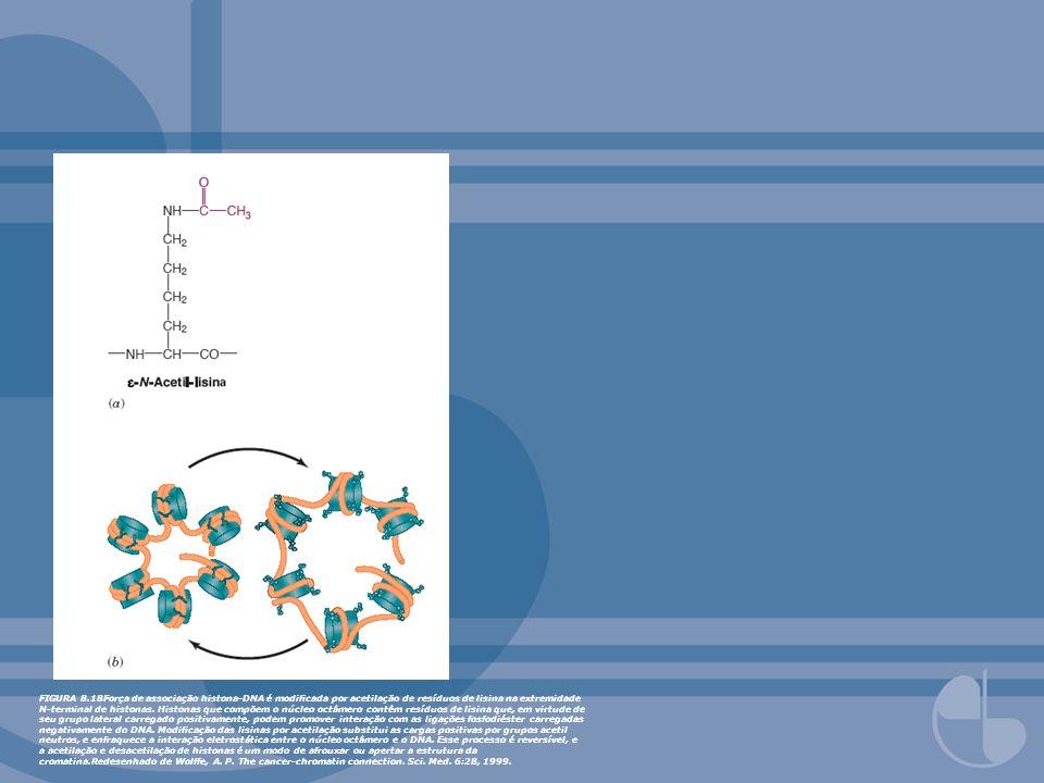 FIGURA 8.18Força de associação histona-DNA é modicada por acetilação de resíduos de lisina na extremidade N-terminal de histonas. Histonas que compõem