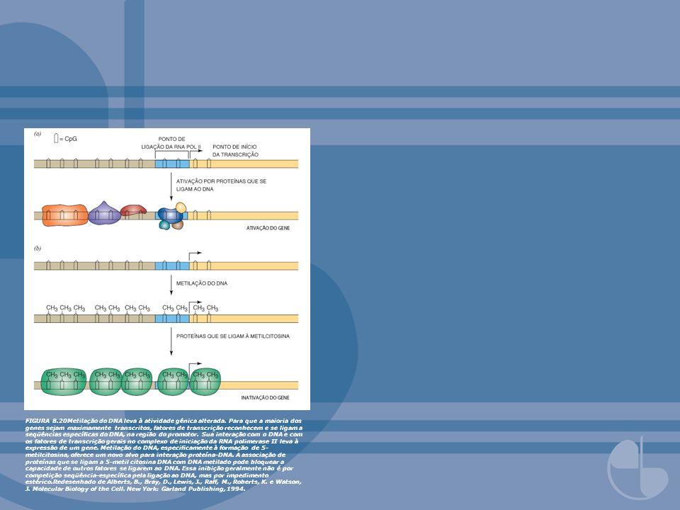 FIGURA 8.20Metilação do DNA leva à atividade gênica alterada. Para que a maioria dos genes sejam maximamente transcritos, fatores de transcrição recon