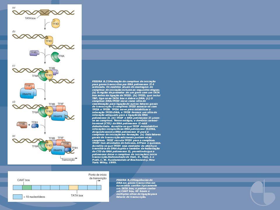 FIGURA 8.22Formação do complexo de iniciação para genes transcritos por RNA polimerase II é ordenada. Os modelos atuais de montagem do complexo de ini