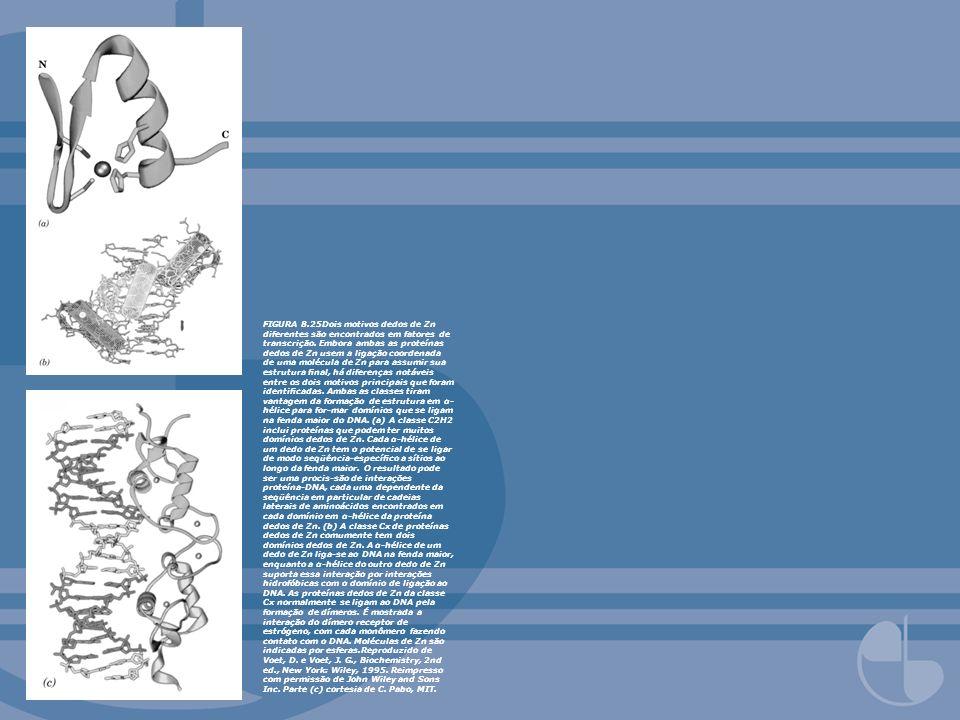 FIGURA 8.25Dois motivos dedos de Zn diferentes são encontrados em fatores de transcrição. Embora ambas as proteínas dedos de Zn usem a ligação coorden