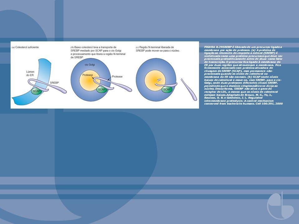 FIGURA 8.29SREBP é liberado de um precursor ligado a membrana por ação de protease. (a) A proteína de ligação ao elemento de resposta a esterol (SREBP
