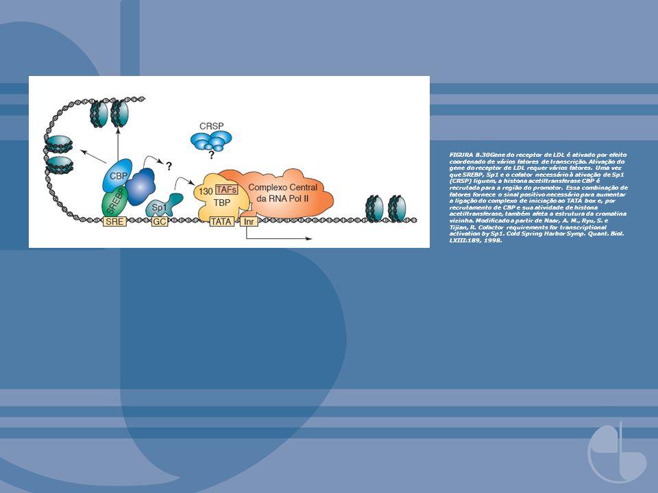 FIGURA 8.30Gene do receptor de LDL é ativado por efeito coordenado de vários fatores de transcrição. Ativação do gene do receptor de LDL requer vários