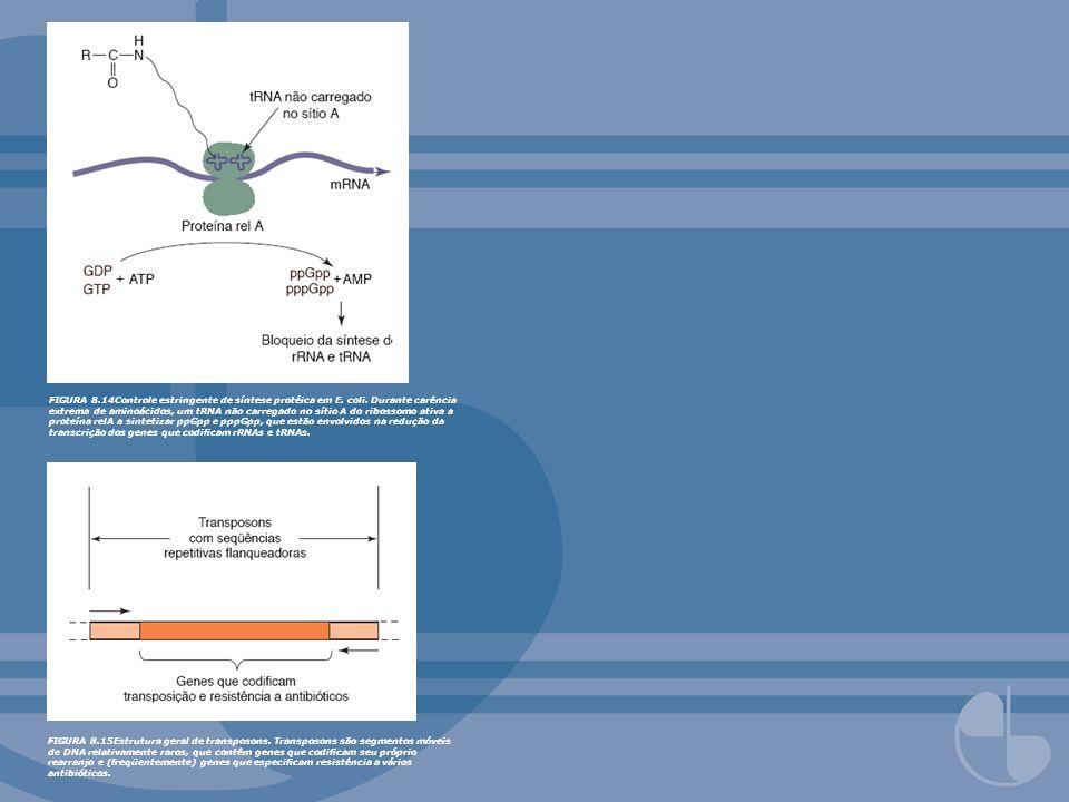 FIGURA 8.14Controle estringente de síntese protéica em E. coli. Durante carência extrema de aminoácidos, um tRNA não carregado no sítio A do ribossomo