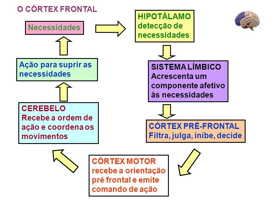 HIPOTÁLAMO detecção de necessidades SISTEMA LÍMBICO Acrescenta um componente afetivo às necessidades CÓRTEX PRÉ-FRONTAL Filtra, julga, inibe, decide C