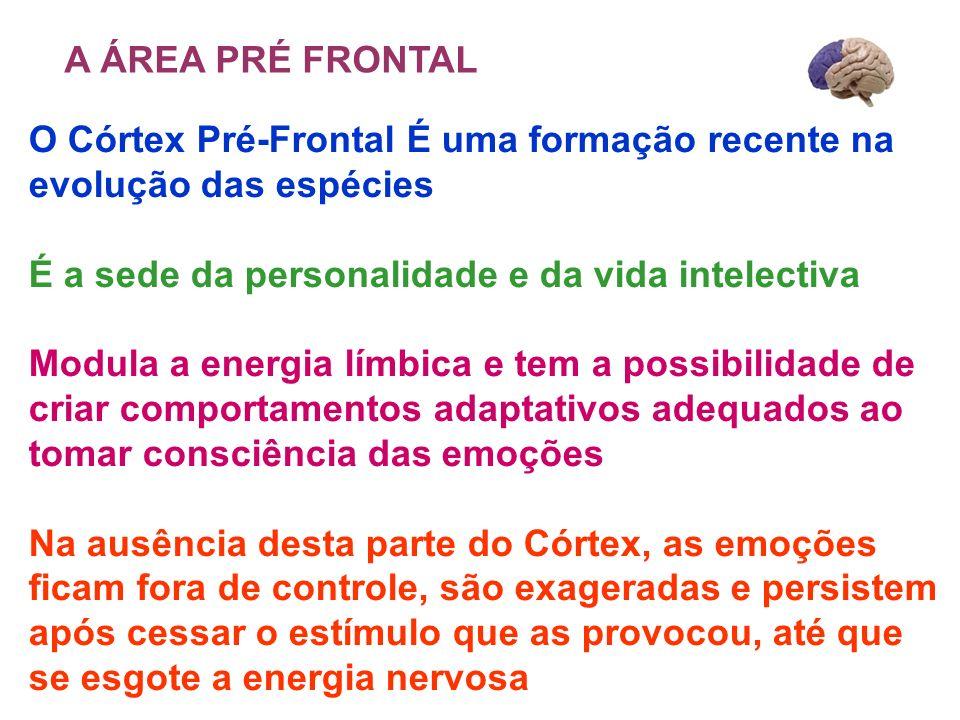 O Córtex Pré-Frontal É uma formação recente na evolução das espécies É a sede da personalidade e da vida intelectiva Modula a energia límbica e tem a