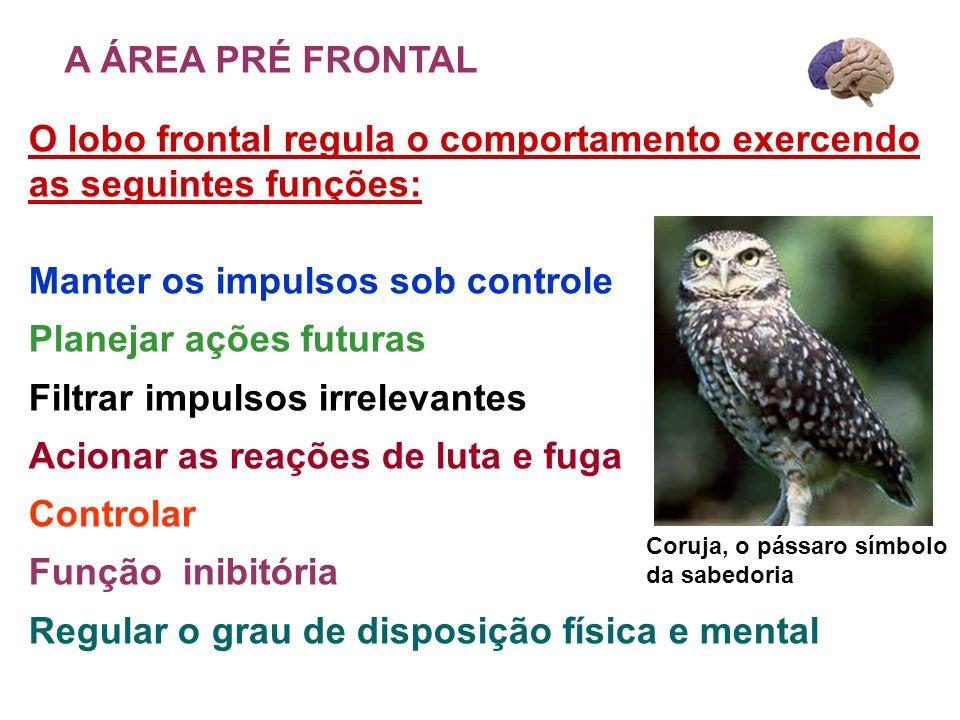 O lobo frontal regula o comportamento exercendo as seguintes funções: Manter os impulsos sob controle Planejar ações futuras Filtrar impulsos irreleva