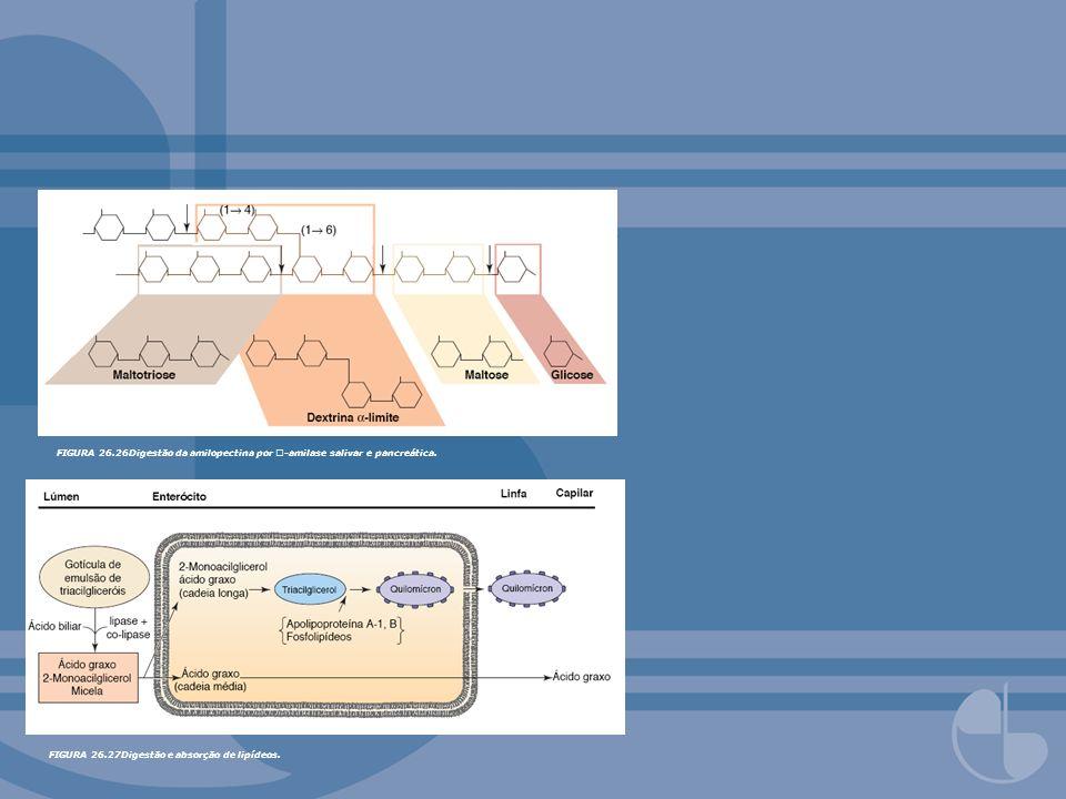 FIGURA 26.26Digestão da amilopectina por -amilase salivar e pancreática. FIGURA 26.27Digestão e absorção de lipídeos.