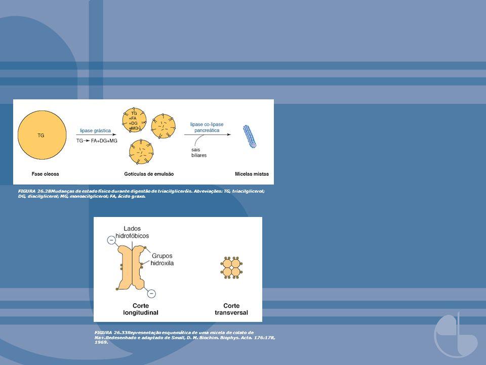 FIGURA 26.28Mudanças de estado físico durante digestão de triacilgliceróis. Abreviações: TG, triacilglicerol; DG, diacilglicerol; MG, monoacilglicerol