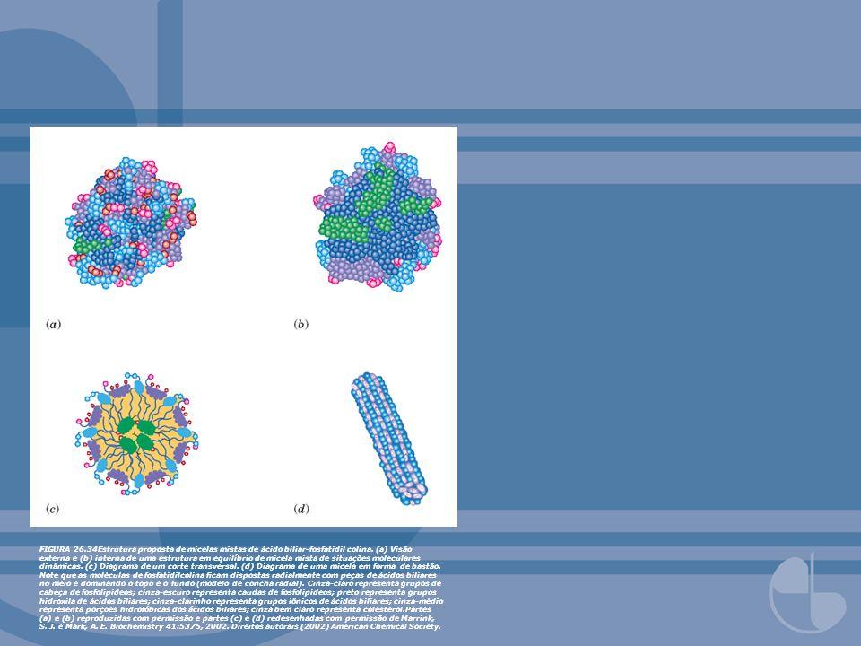 FIGURA 26.34Estrutura proposta de micelas mistas de ácido biliar-fosfatidil colina. (a) Visão externa e (b) interna de uma estrutura em equilíbrio de