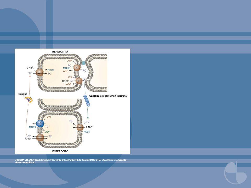 FIGURA 26.36Mecanismos moleculares do transporte de taurocolato (TC) durante a circulação êntero-hepática.