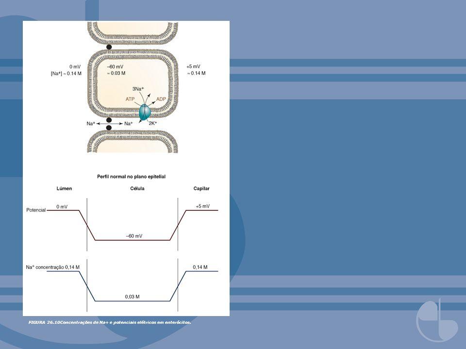 FIGURA 25.19Indução de invasão e crescimento de células endoteliais de vasos sangüíneos pela célula tumoral na angiogênese.