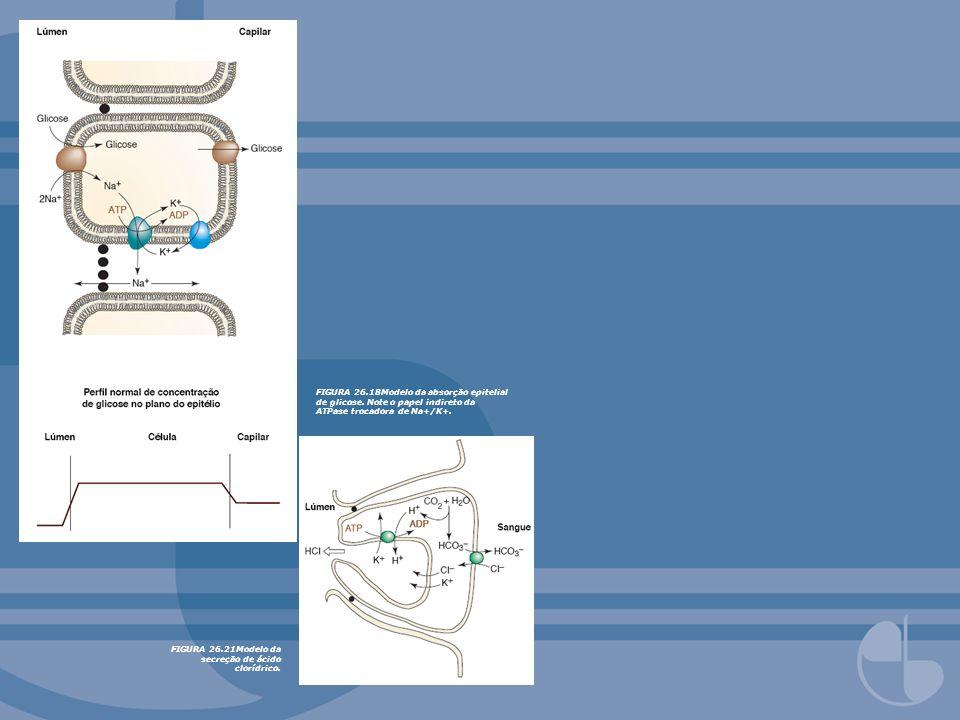 FIGURA 26.21Modelo da secreção de ácido clorídrico. FIGURA 26.18Modelo da absorção epitelial de glicose. Note o papel indireto da ATPase trocadora de