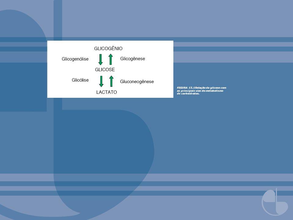 FIGURA 15.33Via da gluconeogênese a partir de lactato.