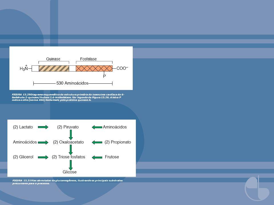 FIGURA 15.29Diagrama esquemático da estrutura primária da isoenzima cardíaca da 6- fosfofruto-2-quinase/frutose 2,6-bisfosfatase. Ver legenda da Figur
