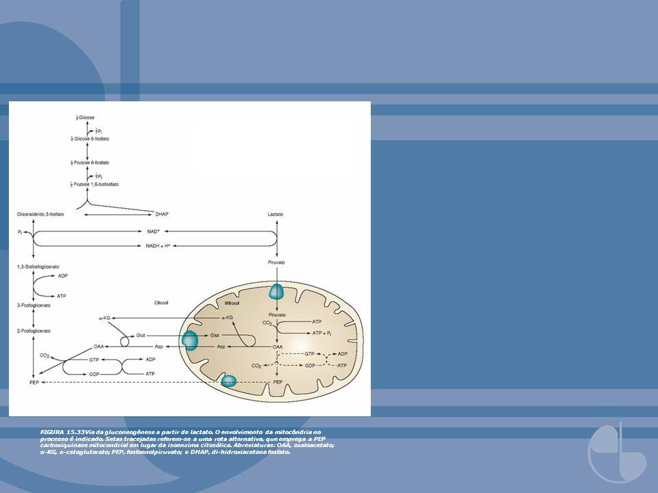 FIGURA 15.33Via da gluconeogênese a partir de lactato. O envolvimento da mitocôndria no processo é indicado. Setas tracejadas referem-se a uma rota al