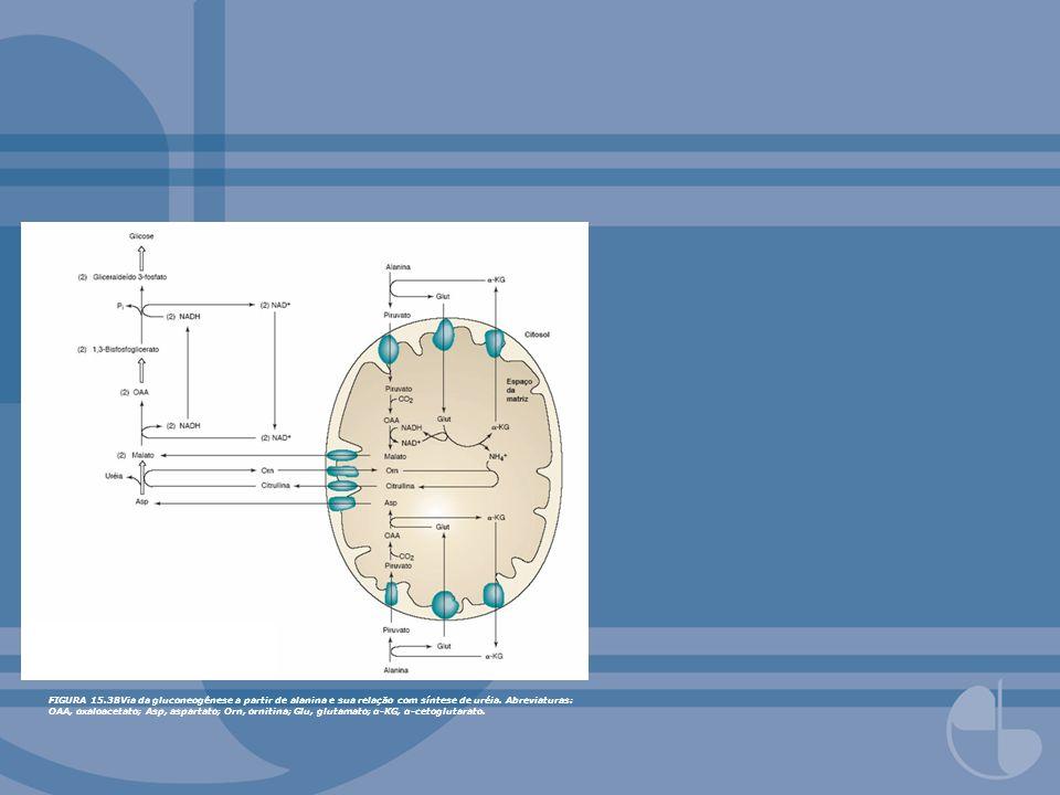 FIGURA 15.38Via da gluconeogênese a partir de alanina e sua relação com síntese de uréia. Abreviaturas: OAA, oxaloacetato; Asp, aspartato; Orn, orniti