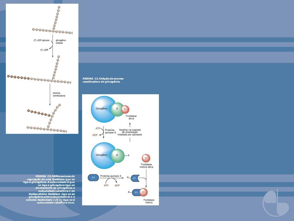 FIGURA 15.54Ação da enzima ramicadora do glicogênio. FIGURA 15.58Mecanismo de regulação de uma fosfatase que se liga a glicogênio. A subunidade G que