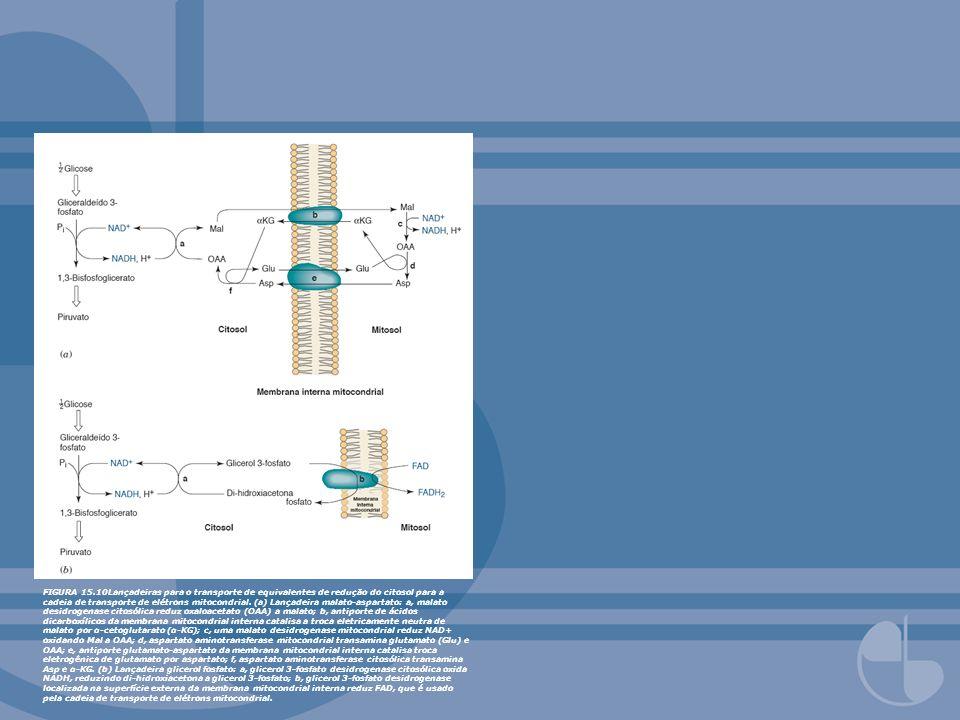 FIGURA 15.10Lançadeiras para o transporte de equivalentes de redução do citosol para a cadeia de transporte de elétrons mitocondrial. (a) Lançadeira m