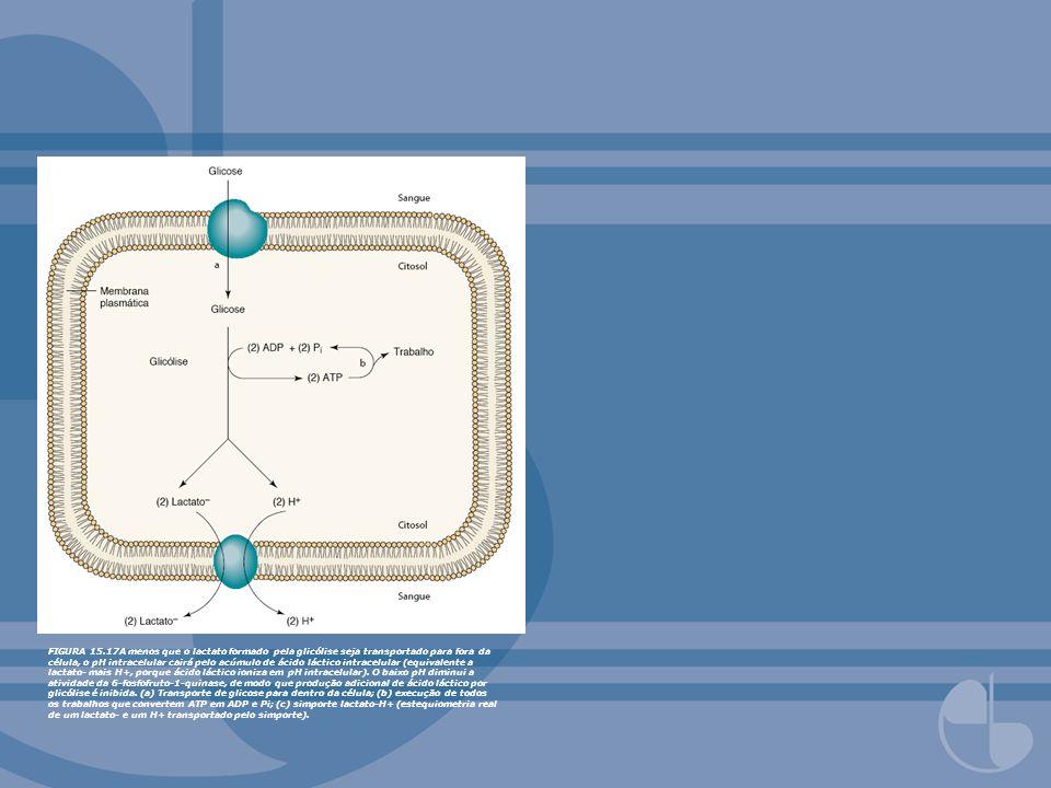 FIGURA 15.17A menos que o lactato formado pela glicólise seja transportado para fora da célula, o pH intracelular cairá pelo acúmulo de ácido láctico