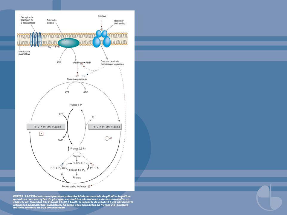 FIGURA 15.27Mecanismo responsável pela velocidade aumentada da glicólise hepática, quando as concentrações de glucagon e epinefrina são baixas e a de