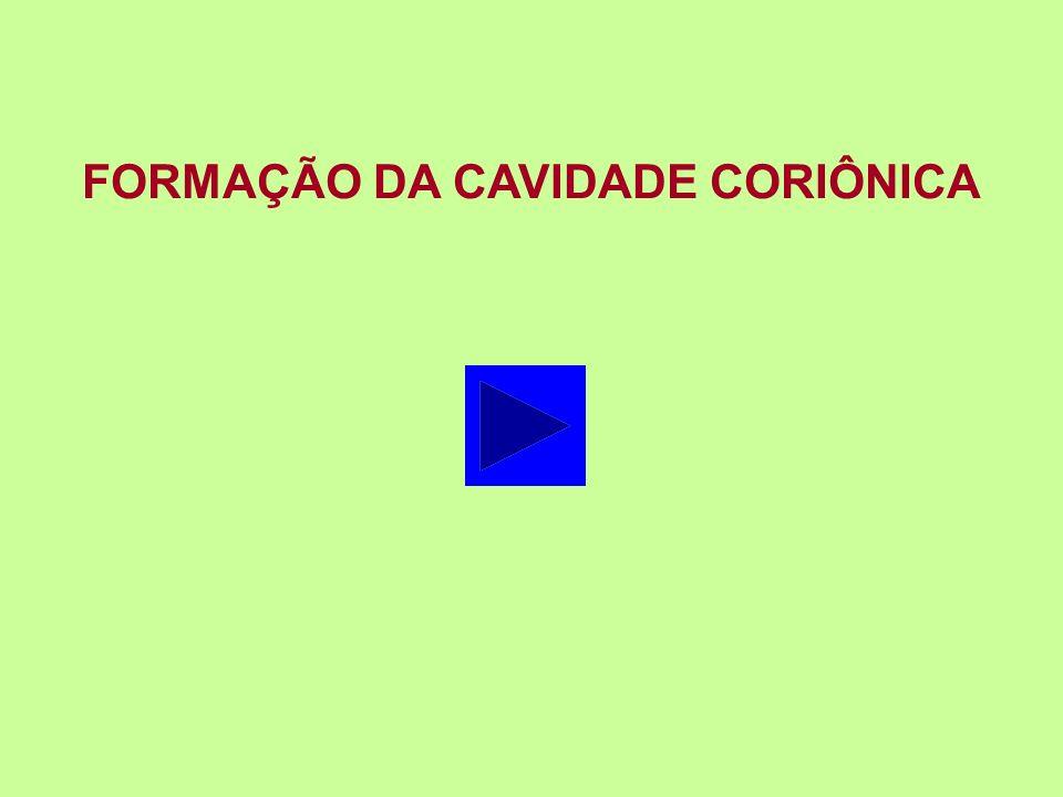FORMAÇÃO DA CAVIDADE CORIÔNICA
