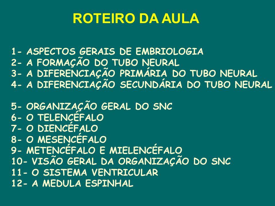 1- ASPECTOS GERAIS DE EMBRIOLOGIA 2- A FORMAÇÃO DO TUBO NEURAL 3- A DIFERENCIAÇÃO PRIMÁRIA DO TUBO NEURAL 4- A DIFERENCIAÇÃO SECUNDÁRIA DO TUBO NEURAL