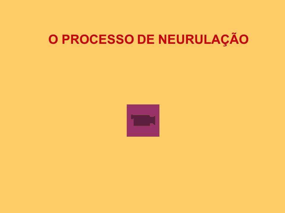 O PROCESSO DE NEURULAÇÃO