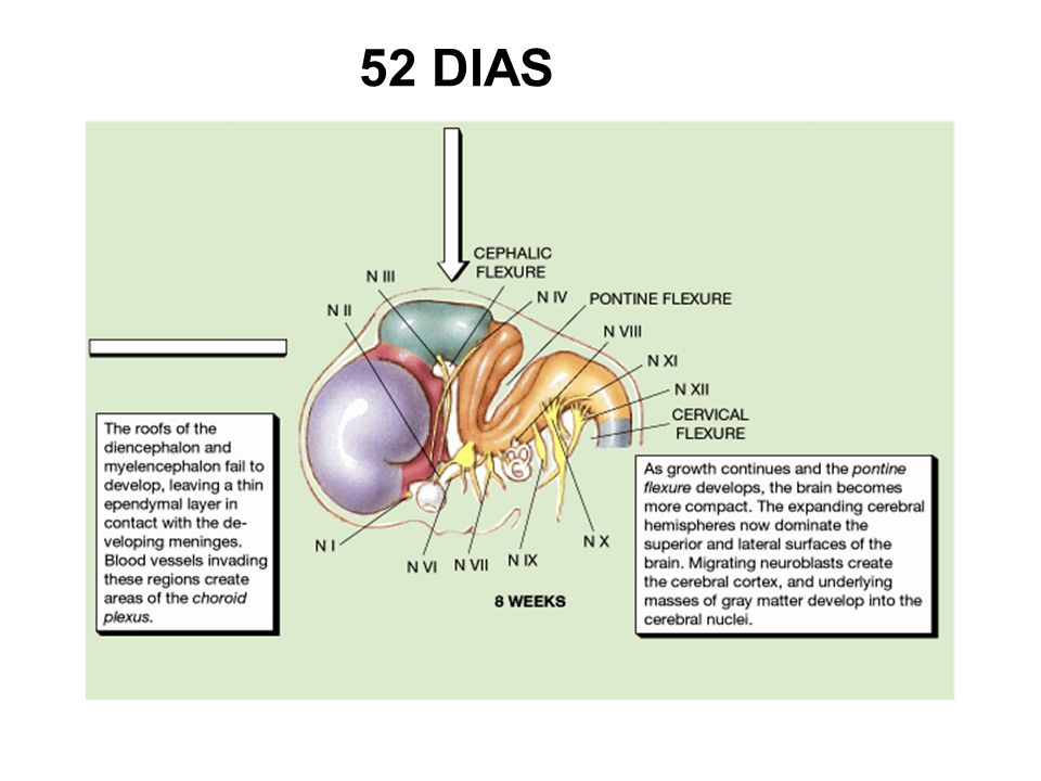 52 DIAS