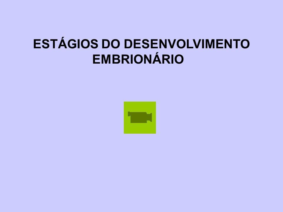ESTÁGIOS DO DESENVOLVIMENTO EMBRIONÁRIO