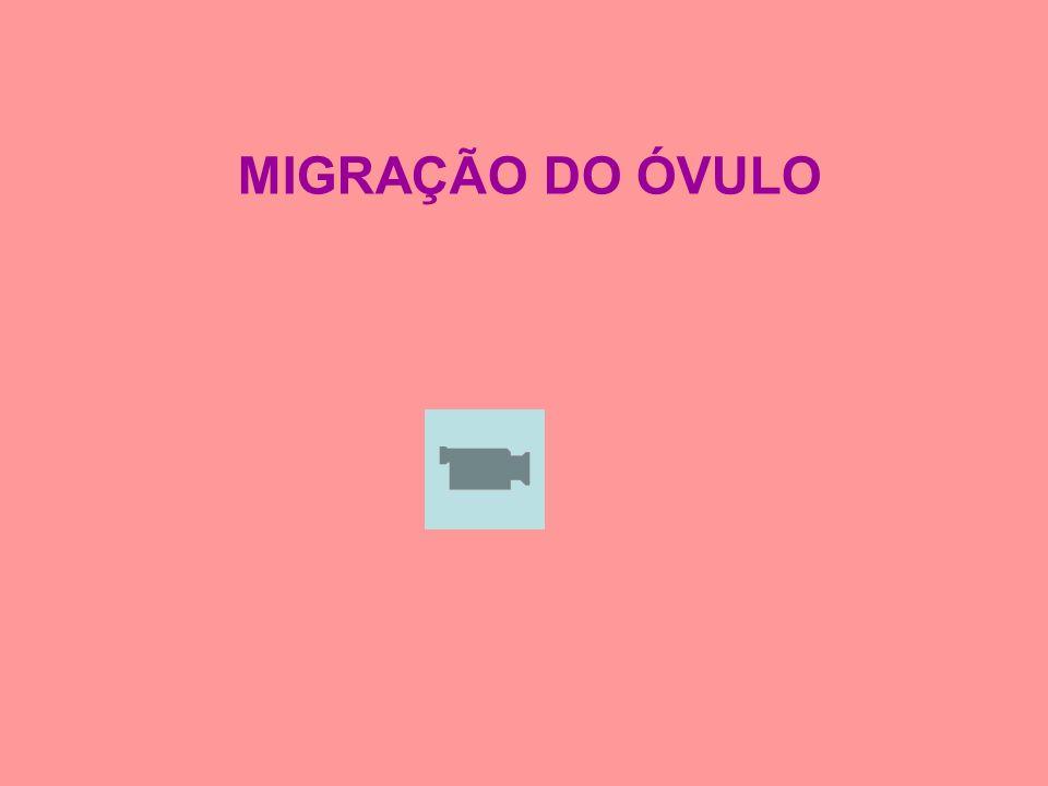MIGRAÇÃO DO ÓVULO