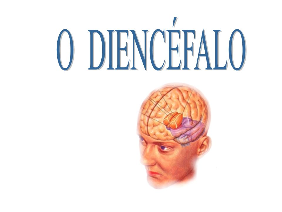 1- UMA VISÃO GERAL DO DIENCÉFALO