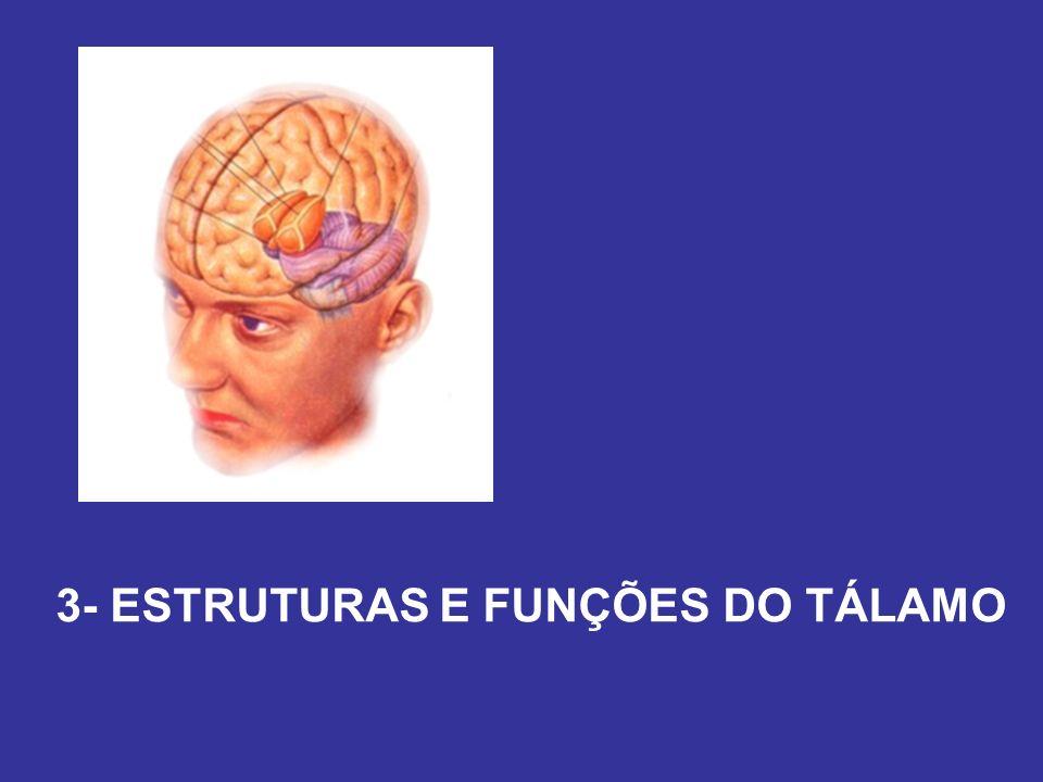 3- ESTRUTURAS E FUNÇÕES DO TÁLAMO