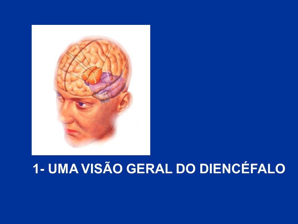 ESTRUTURAS DO EPITÁLAMO GLÂNDULA PINEAL