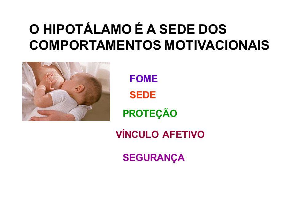 O HIPOTÁLAMO É A SEDE DOS COMPORTAMENTOS MOTIVACIONAIS FOME PROTEÇÃO VÍNCULO AFETIVO SEDE SEGURANÇA