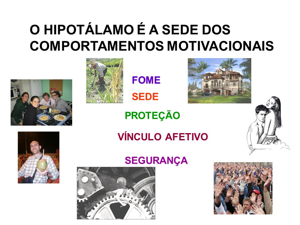 O HIPOTÁLAMO É A SEDE DOS COMPORTAMENTOS MOTIVACIONAIS FOME PROTEÇÃO VÍNCULO AFETIVO SEDE SEGURANÇA FOME