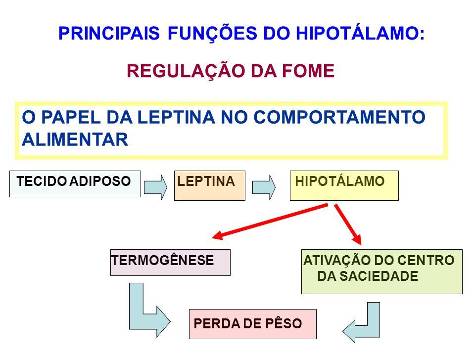 PRINCIPAIS FUNÇÕES DO HIPOTÁLAMO: REGULAÇÃO DA FOME O PAPEL DA LEPTINA NO COMPORTAMENTO ALIMENTAR TECIDO ADIPOSO LEPTINA HIPOTÁLAMO TERMOGÊNESE ATIVAÇ