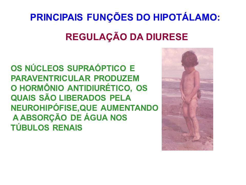 PRINCIPAIS FUNÇÕES DO HIPOTÁLAMO: REGULAÇÃO DA DIURESE OS NÚCLEOS SUPRAÓPTICO E PARAVENTRICULAR PRODUZEM O HORMÔNIO ANTIDIURÉTICO, OS QUAIS SÃO LIBERA