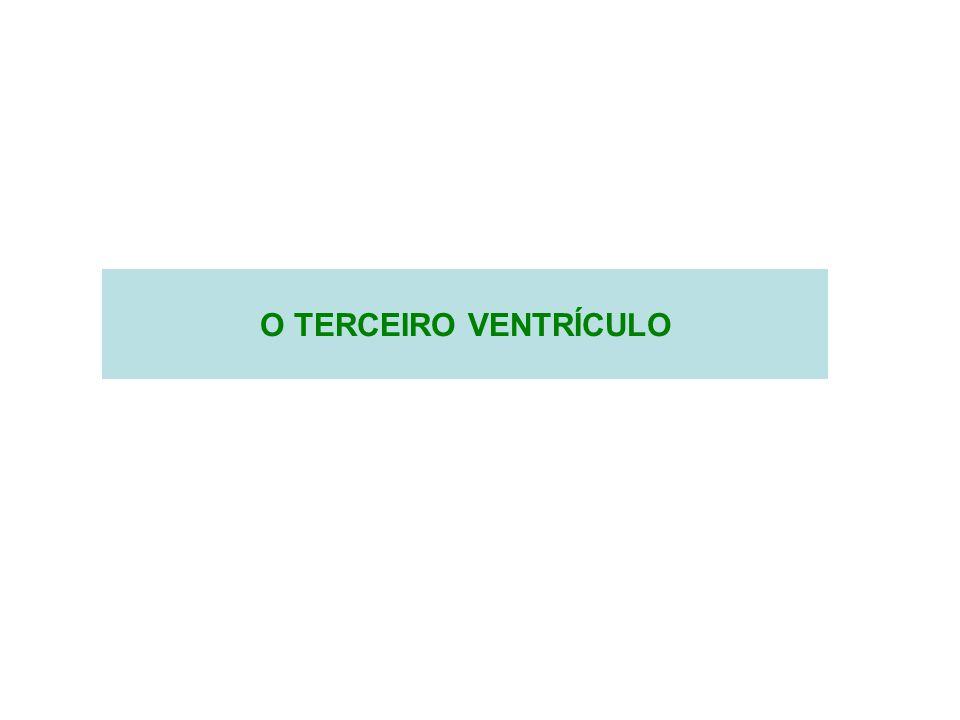 O TERCEIRO VENTRÍCULO