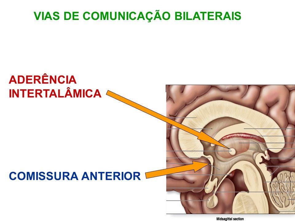 VIAS DE COMUNICAÇÃO BILATERAIS ADERÊNCIA INTERTALÂMICA COMISSURA ANTERIOR