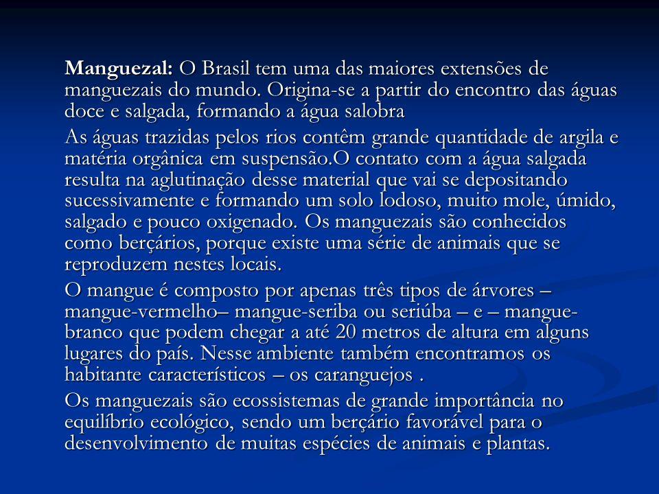 Manguezal: O Brasil tem uma das maiores extensões de manguezais do mundo. Origina-se a partir do encontro das águas doce e salgada, formando a água sa