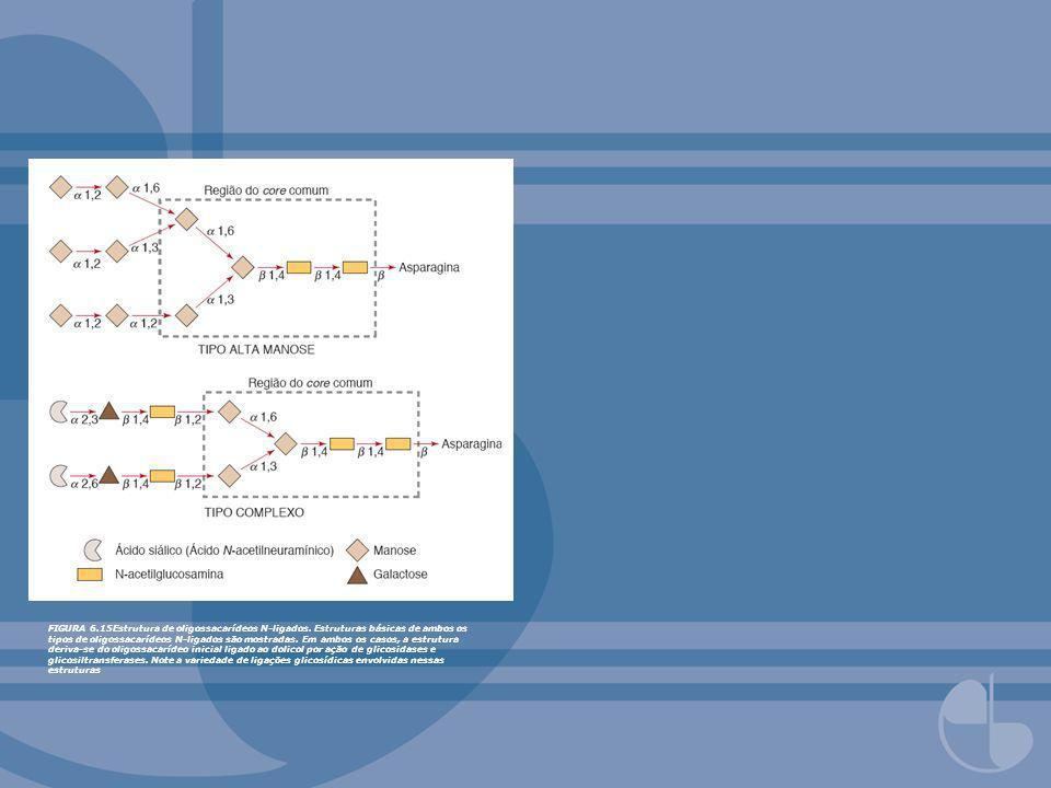 FIGURA 6.15Estrutura de oligossacarídeos N-ligados. Estruturas básicas de ambos os tipos de oligossacarídeos N-ligados são mostradas. Em ambos os caso