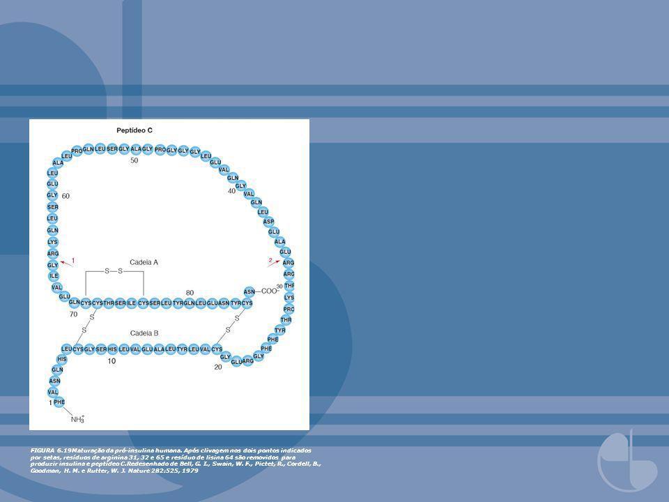 FIGURA 6.19Maturação da pró-insulina humana. Após clivagem nos dois pontos indicados por setas, resíduos de arginina 31, 32 e 65 e resíduo de lisina 6
