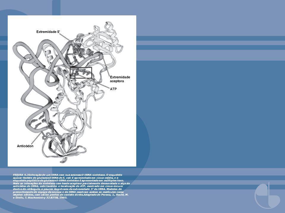 FIGURA 6.3Interação de um tRNA com sua aminoacil-tRNA sintetase. O esqueleto açúcar-fosfato do glutaminil tRNA de E. coli é apresentado em cinza-médio
