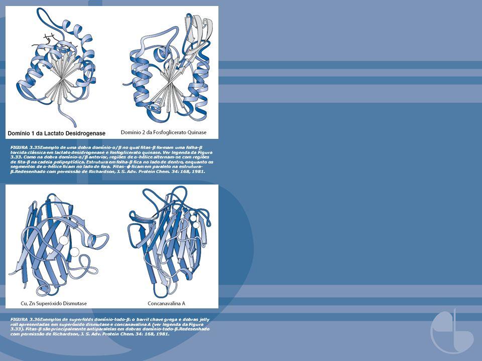 FIGURA 3.35Exemplo de uma dobra domínio-α/β no qual tas-β formam uma folha-β torcida clássica em lactato desidrogenase e fosfoglicerato quinase. Ver l