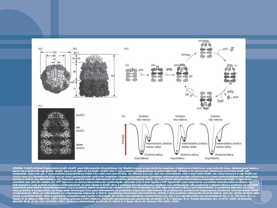 FIGURA 3.46O sistema Chaperonina GroEL-GroES para dobramento de proteínas. (a) Modelo espaço preenchido do complexo chaperonina inteiro em uma vista d